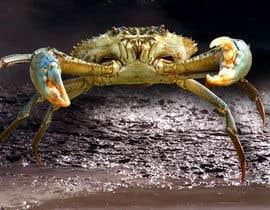 Nro 71 kilpailuun Australian Mud Crab käyttäjältä dulhanindi