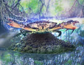 #29 for Australian Mud Crab by octopupus