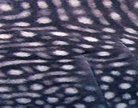 nº 46 pour Whale Shak Pattern par collinsjessica12