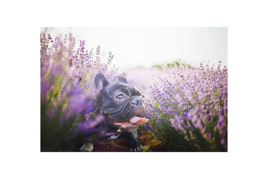 Konkurrenceindlæg #107 for Enhance Dog Photos; Beautifully, Creatively!