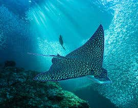 #179 for Design a picture of a spotted eagle ray by mutalebkhan71