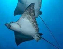 #182 for Design a picture of a spotted eagle ray by nasro31