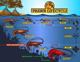 nº 14 pour Illustrate - Prawn Life Cycle par ericgran