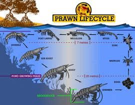 #21 para Illustrate - Prawn Life Cycle por ericgran