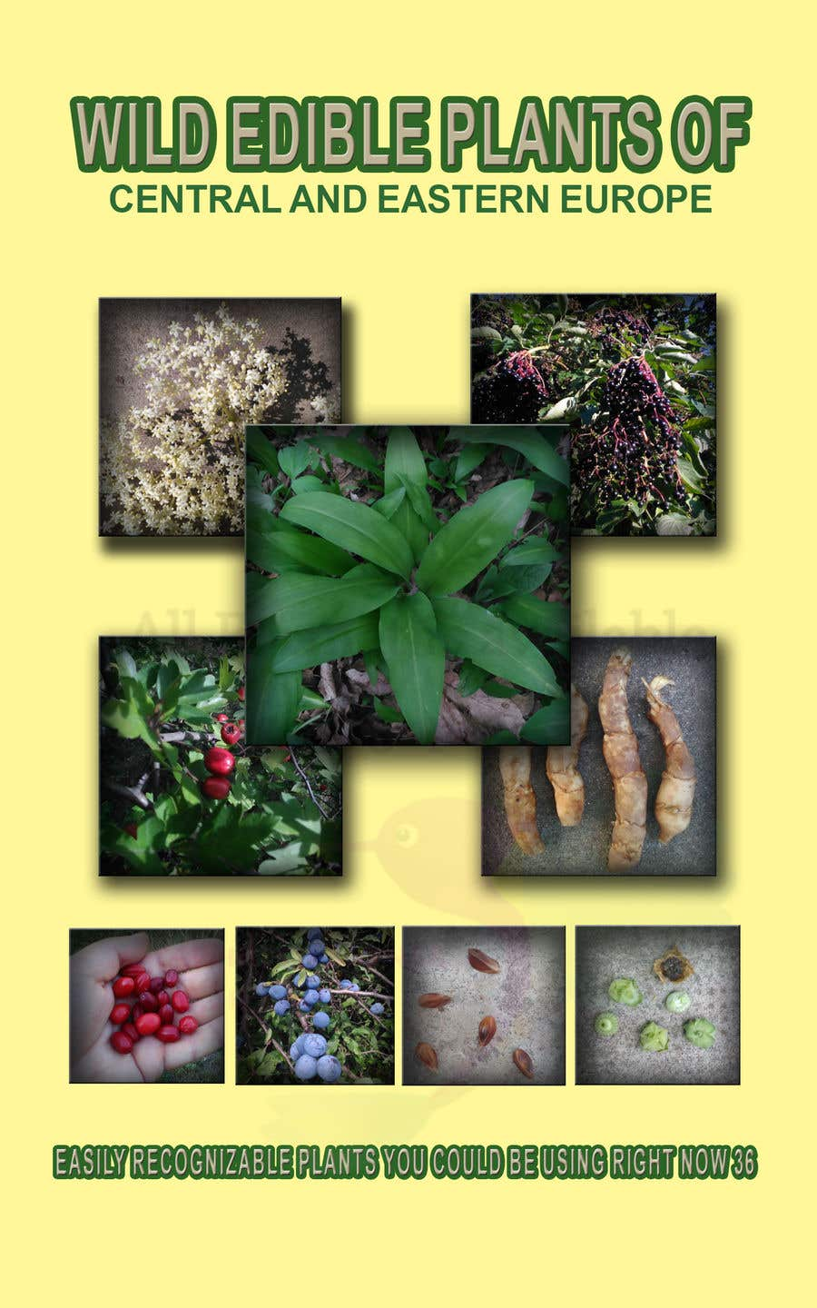 Konkurrenceindlæg #5 for I need a cover for my ebook