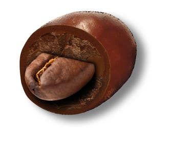 Graphic Design Contest Entry #7 for HD Image of coffee bean coated in chocolate