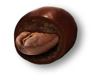 #13 for HD Image of coffee bean coated in chocolate by Batmanci