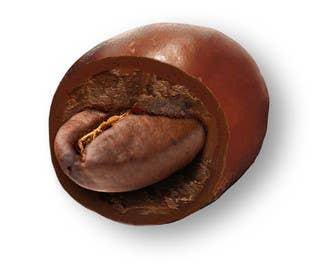 #14 for HD Image of coffee bean coated in chocolate by Batmanci