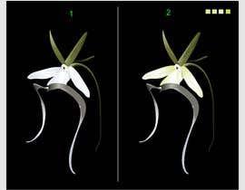 #10 untuk Illustrator work for orchid decal oleh denistarcomreal
