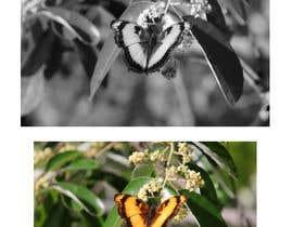 Nro 31 kilpailuun Photo Editing käyttäjältä Mezbah9213