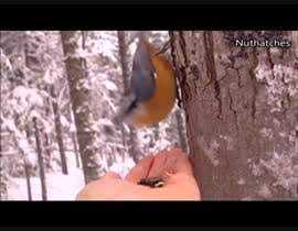 #4 for Create a video    -----   Top 10 most incredible North American birds by ahmedmidan3922