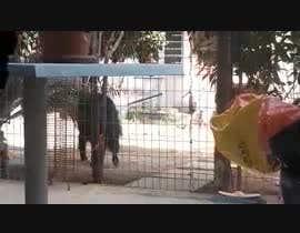 Nro 5 kilpailuun Create a youtube video  -------  100 Animals Being Smart käyttäjältä ptriantafillis