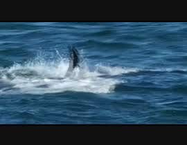 #3 cho Create a youtube video ------- 100 Sharks Attack  !!! bởi panalquit01