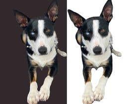 Nro 152 kilpailuun make my dog image background transparent so I can print them on t-shirts, socks, shorts, etc. käyttäjältä mithonks1096