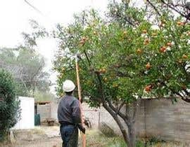 #18 untuk Do some Research on a list of Gardening and Tree Pruning topics for Australian conditions oleh muritals