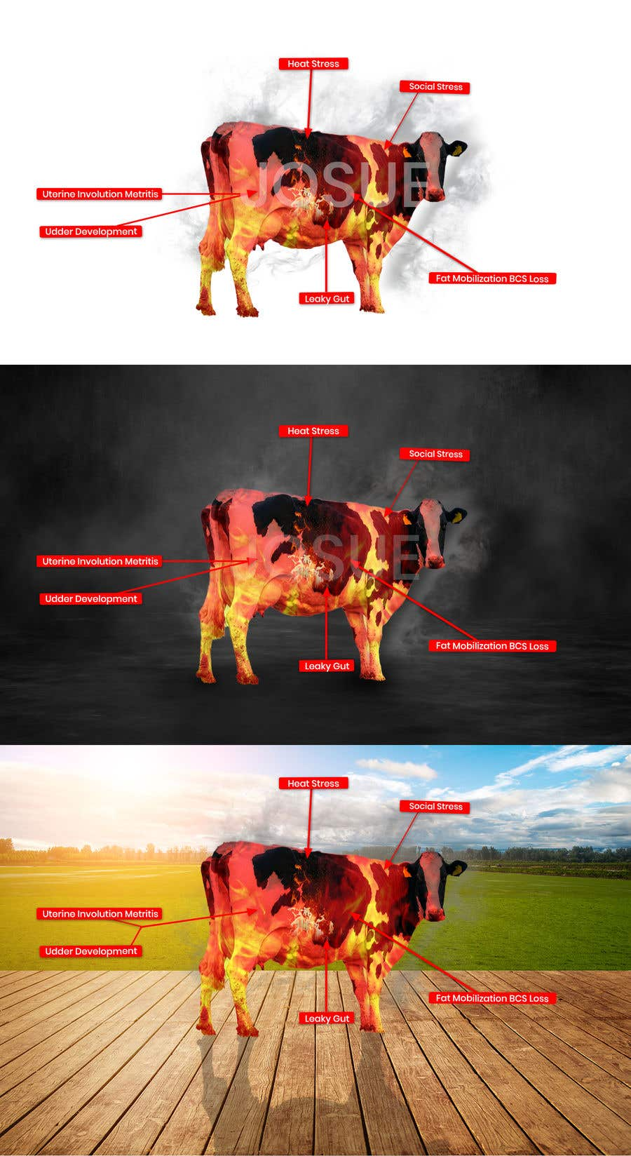 Contest Entry #                                        24                                      for                                         Make me a Cow Fire Graphic