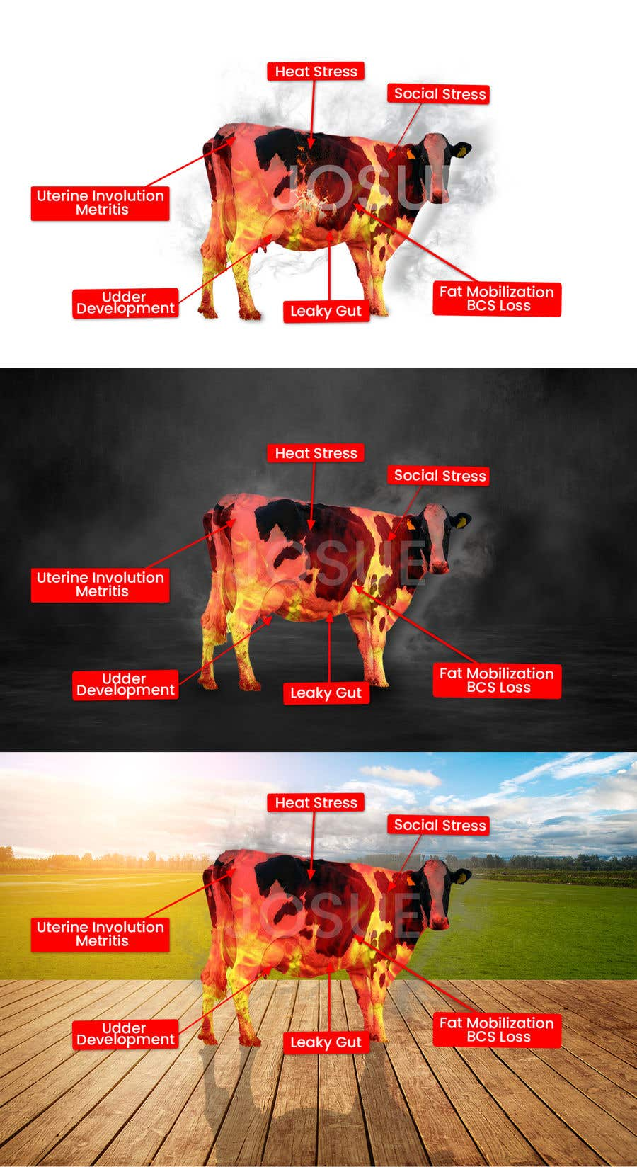 Contest Entry #                                        37                                      for                                         Make me a Cow Fire Graphic