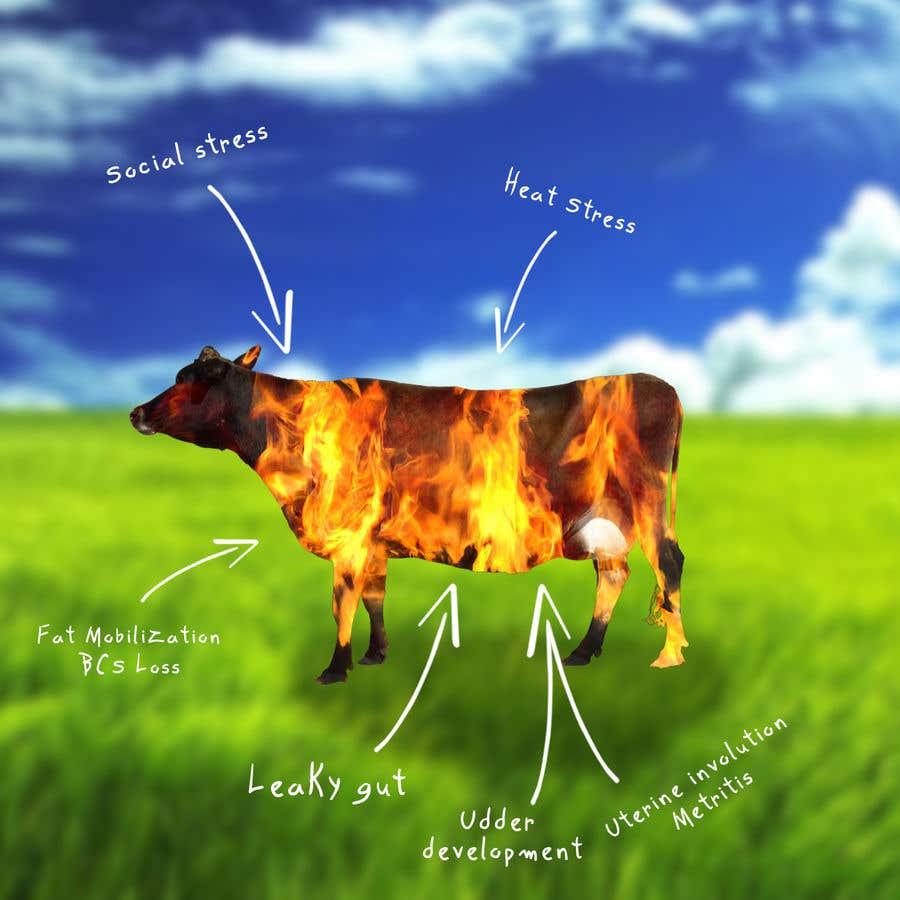 Kilpailutyö #                                        5                                      kilpailussa                                         Make me a Cow Fire Graphic