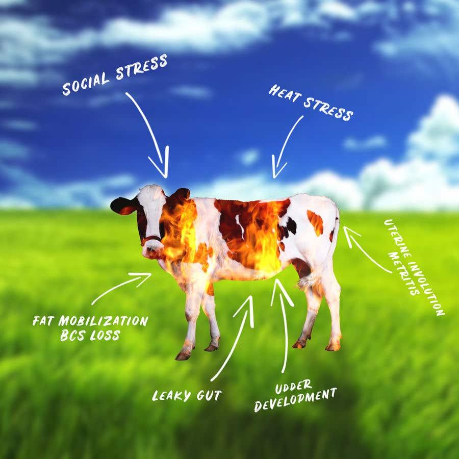 Kilpailutyö #                                        23                                      kilpailussa                                         Make me a Cow Fire Graphic