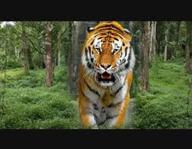 Nro 12 kilpailuun Tiger compositing into jungle käyttäjältä ramyboctor1978