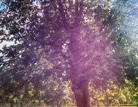 #82 untuk Big Tree Photo edit oleh cofilicavujovic
