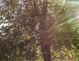 kennsosa tarafından Big Tree Photo edit için no 41