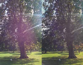 #38 untuk Big Tree Photo edit oleh Henricha