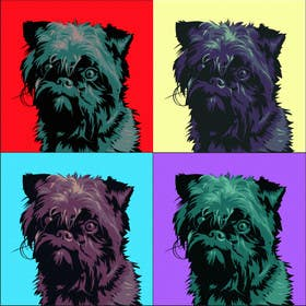 #18 for Affenpinscher dog converted to Pop Art by elenabsl