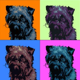 #19 for Affenpinscher dog converted to Pop Art by elenabsl