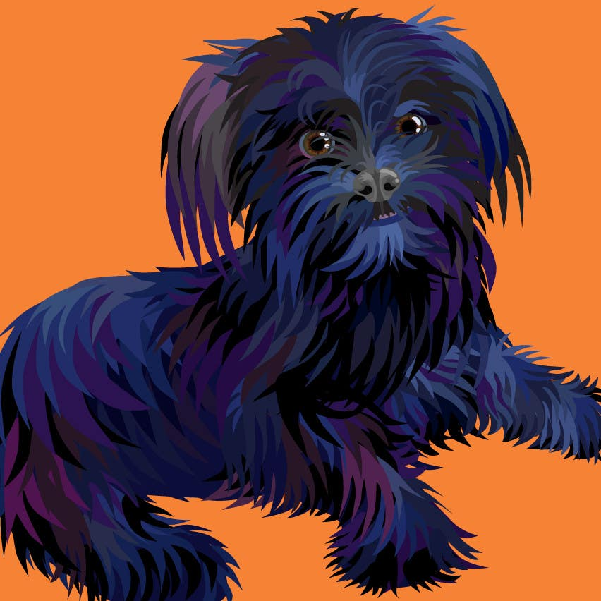 #23 for Affenpinscher dog converted to Pop Art by sophialotus