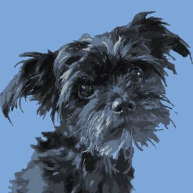 #9 for Affenpinscher dog converted to Pop Art by houerd