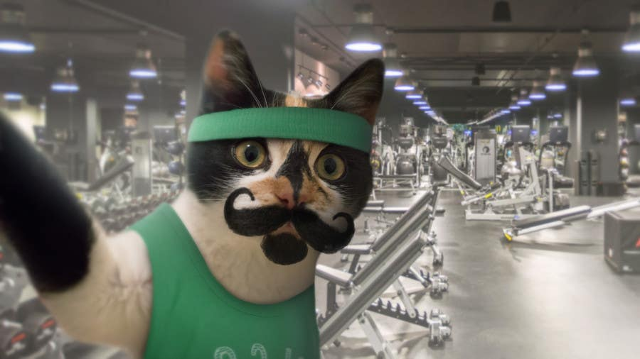 Contest Entry #                                        65                                      for                                         Freelancer.com #MOVEmber Challenge - Give Your Pet a Makeover (Photoshop Design Contest)