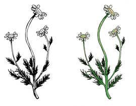 #20 para Botanical illustrations: 3 flowers for product labels por terra4383