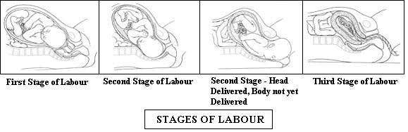 #13 for Illustrate timeline of pregnancy with 4 stages of testing by Venkatcg