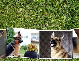 #5 para Design a Banner for Southeast German Shepherd Rescue Website por adstyling