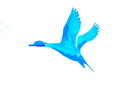 Penyertaan Peraduan #                                        9                                      untuk                                         Pintail Duck