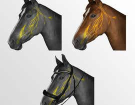 #12 for Equine Drawing Nerves and Head of the Horse by Haylstorm