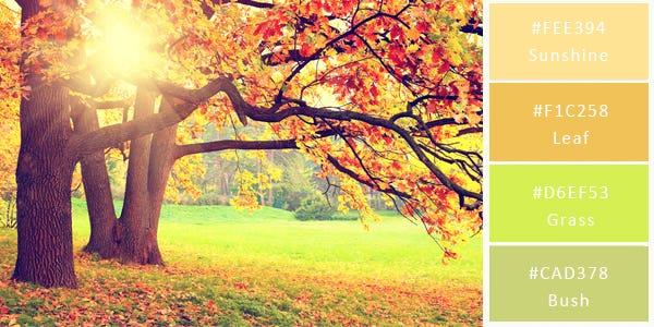 light color combination - autumn