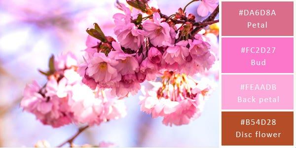 light color combination - pink flowers