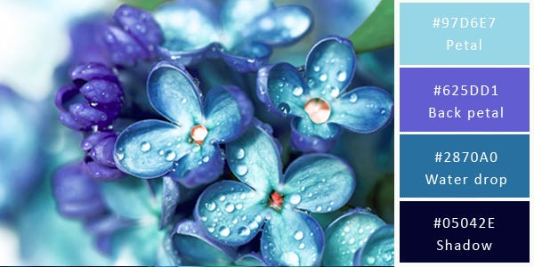 cool color combination - blue flowers