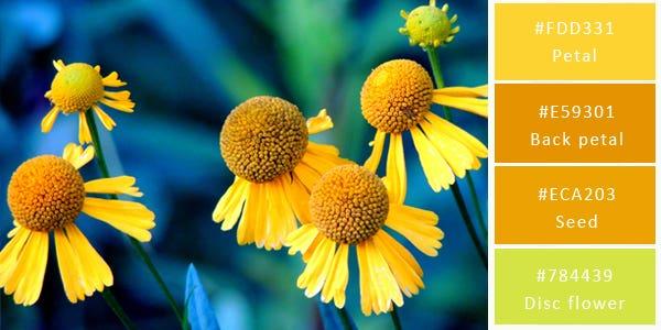 light color combination - flowers