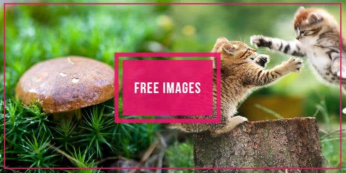 Two free, awesome pictures taken from FreeImages