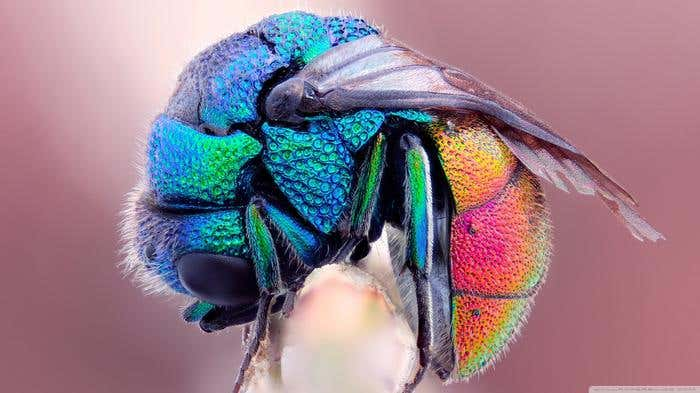 colorful_insect-wallpaper-1366x768