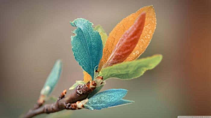 spring_leaves_macro-wallpaper-1366x768