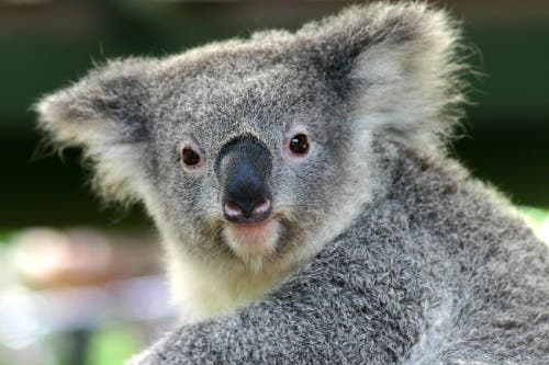 Profile image of cleverkoala